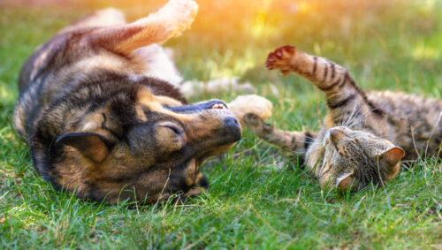 Polarizing Pets: How Do Dog People Differ from Cat People?