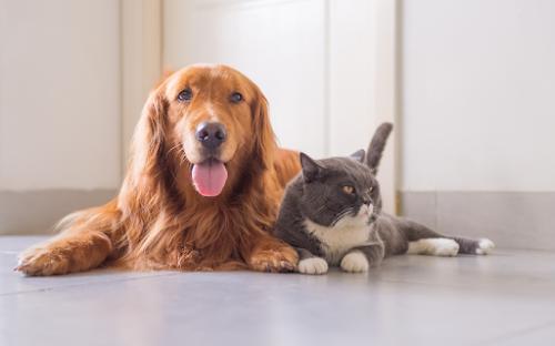 Pet Insights